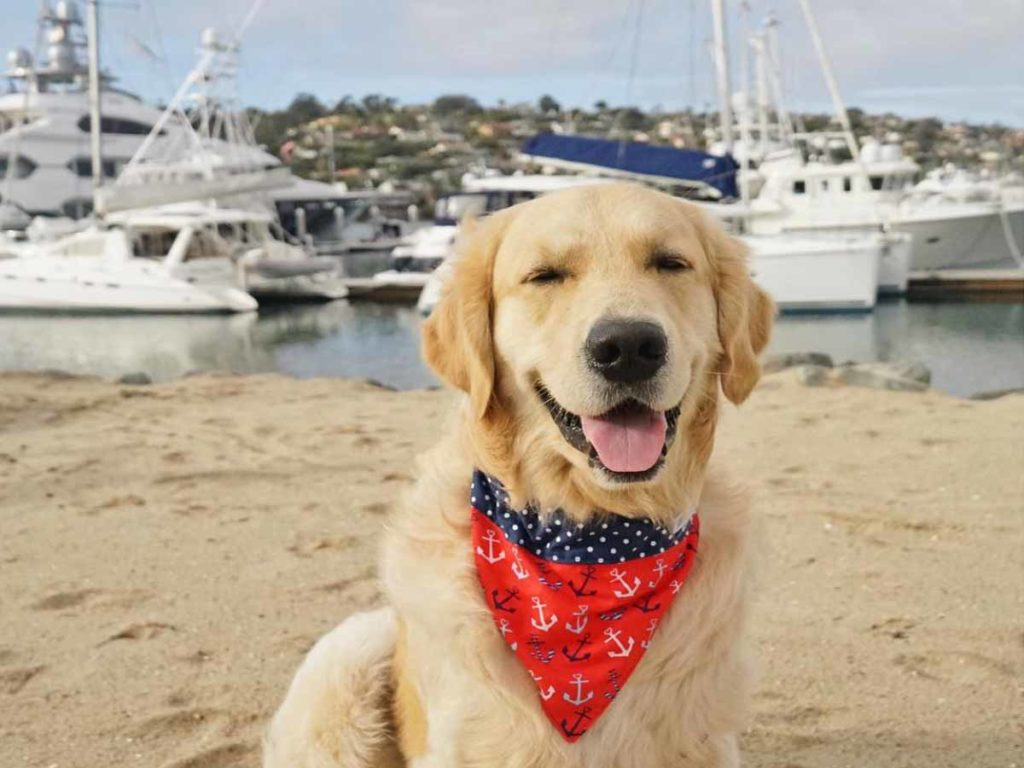 Dog on the Beach wearing a red scarf